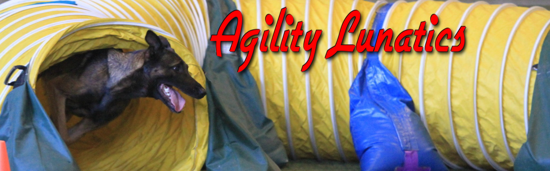Agility Lunatics